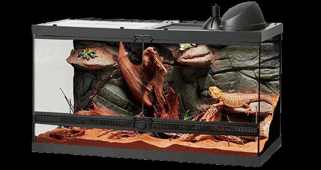 bearded-dragon-habitat