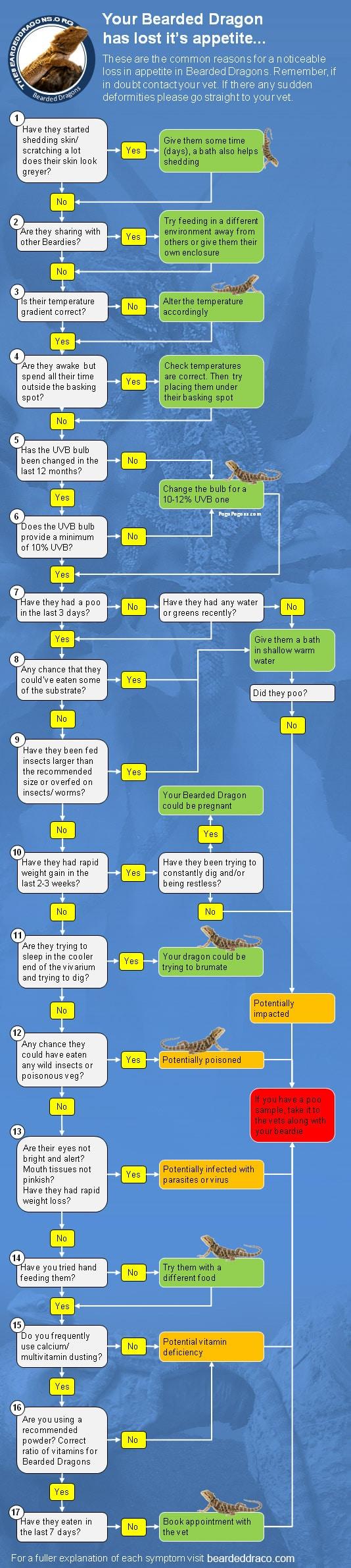 bearded-dragon-loss-of-appetite-flow-chart