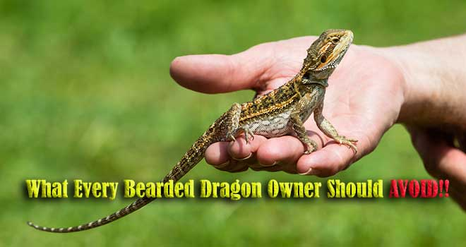 What-Every-Bearded-Dragon-Owner-Should-AVOID!!