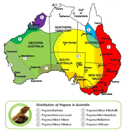 Bearded-Dragon-distribution-in-australia