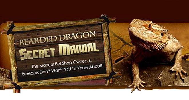 Bearded-dragon-secret-manual