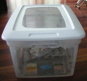 Breeding-container-for-crickets