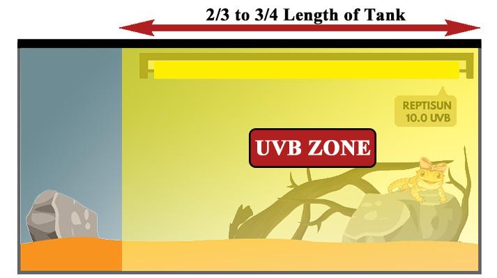 UVB-bearded-dragon-lighting