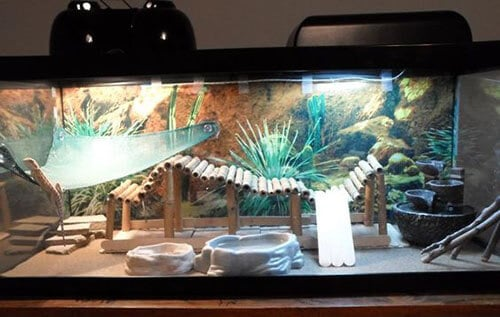 bearded-dragon-vivarium