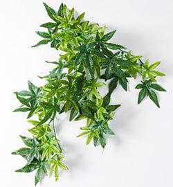 hanging-silk-bearded-dragon-terrarium-plants