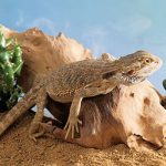 safe-plants-for-bearded-dragon-cage