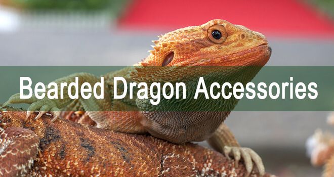 bearded-dragon-accessories