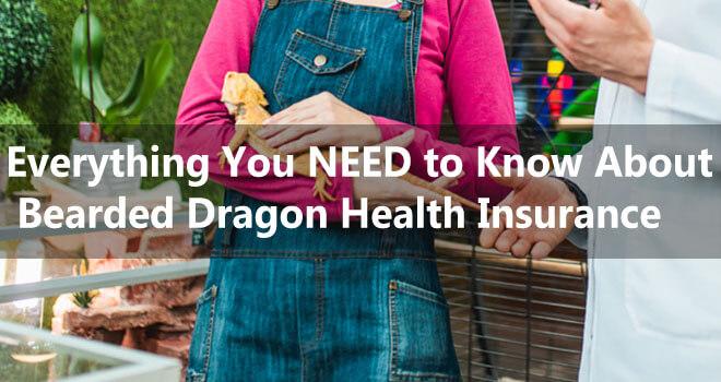 bearded-dragon-health-insurance