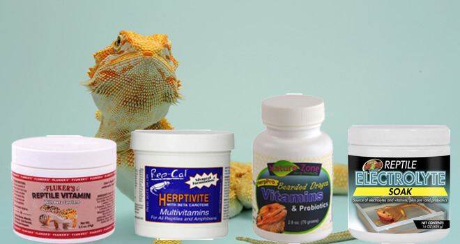 bearded-dragon-supplements