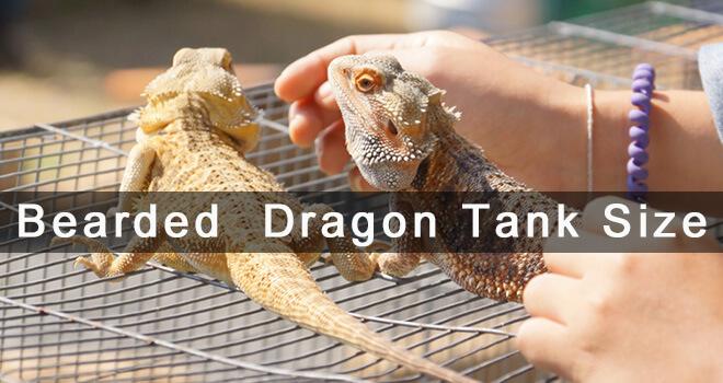 bearded-dragon-tank-size