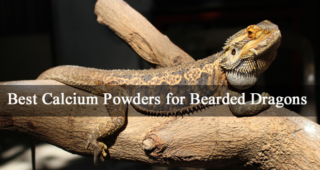 best-calcium-powders-for-bearded-dragons