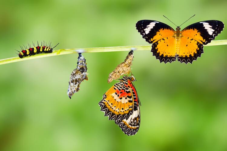 caterpillars or butterflies