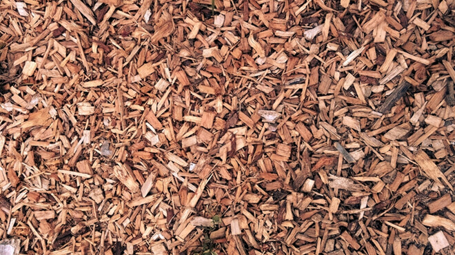 wood-chips-bearded-dragon-substrate