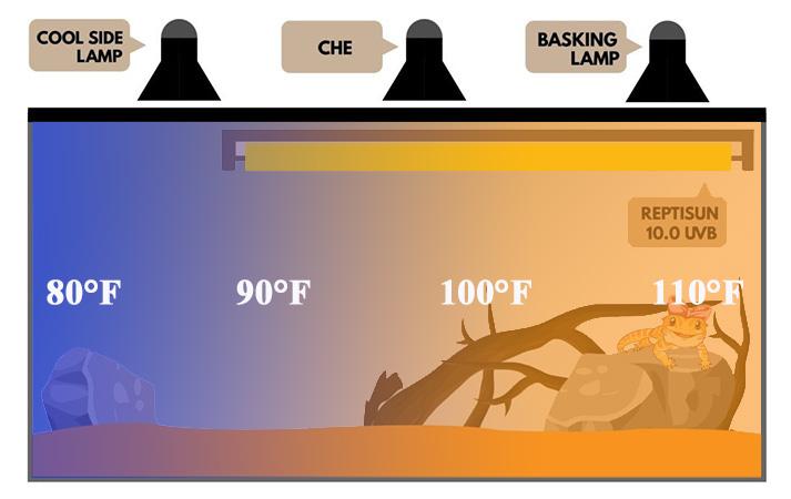 bearded-dragon-temperature-gradient